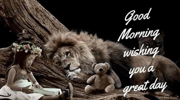 good morning wishing you a nice day
