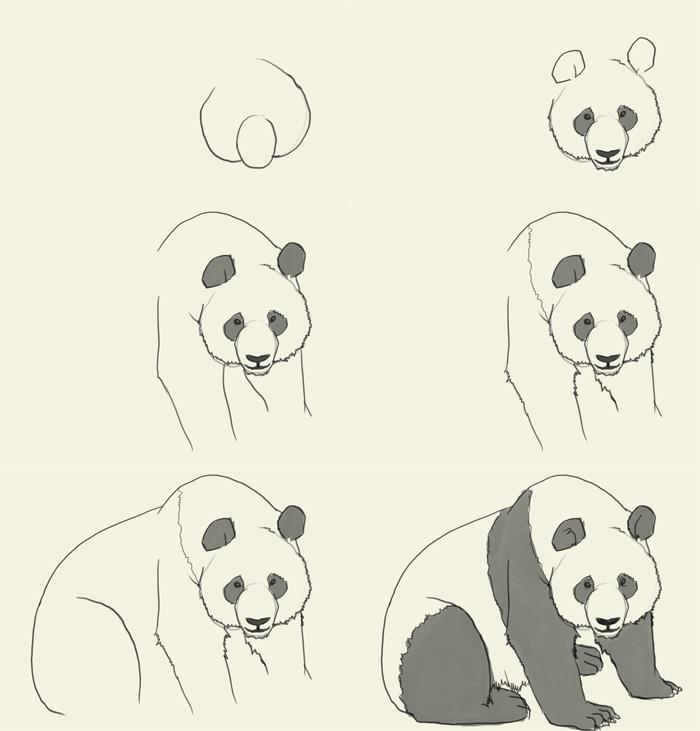 panda drawing step by step - photo #1