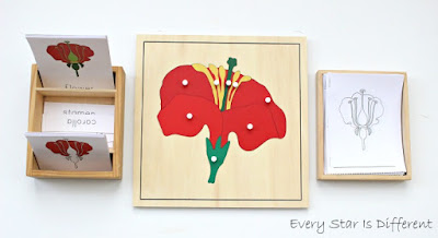 Parts of a flower learning activities and free printables.