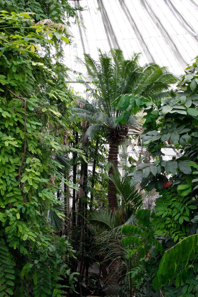 things to see, things to do, Copenhagen, blogger, copenhague, jardin botanique,