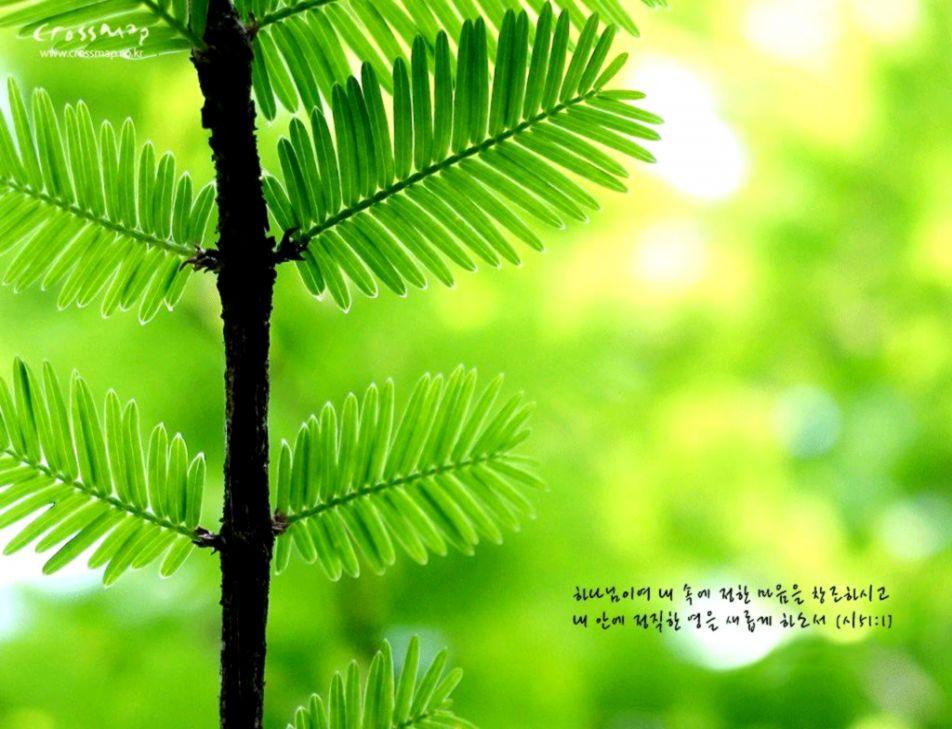 Fresh Hd Forest Wallpaper Rememberingnanabird