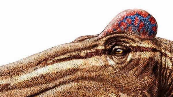 Dinosaurus Edmontosaurus, jengger