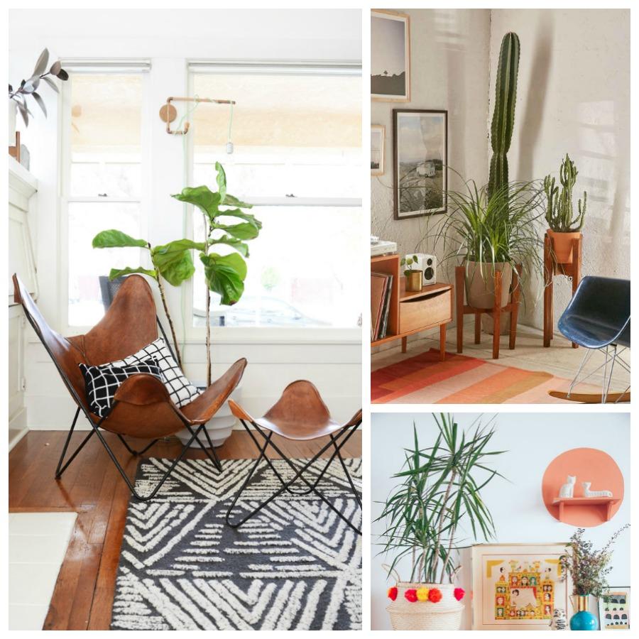 decoracion plantas interior 3