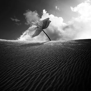 El sueño de la materia y la materia de los sueños, al albur del entendimiento de la belleza, Francisco Acuyo