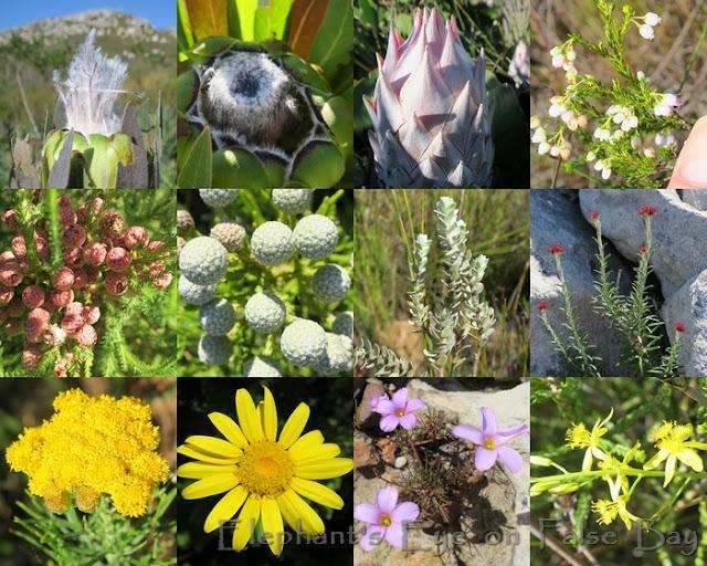 Silvermine Noordhoek April flowers