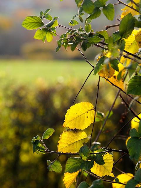 Herfst, Allier