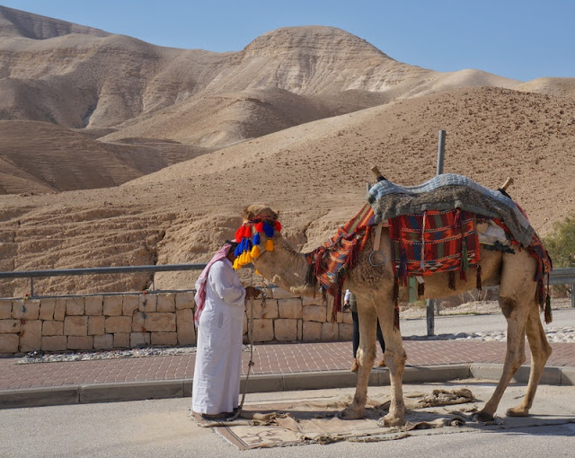 camelos em Israel