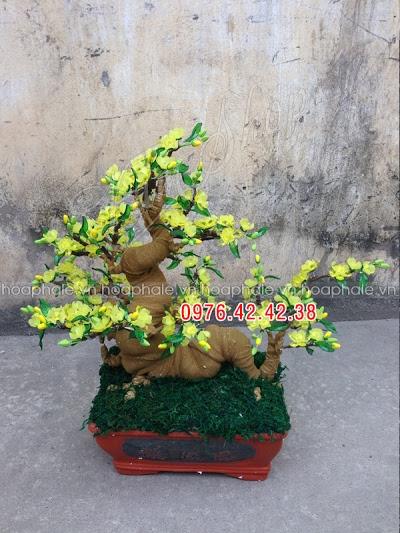 Hoa pha le tai Ba Vi