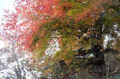 生坂村の古民家カフェ・ひとつ石 モミジと灯篭