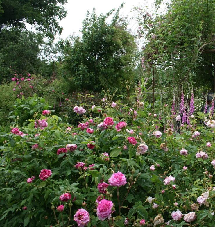 Promesse de roses en normandie la roseraie de jumaju for Jardin 0 l4anglaise