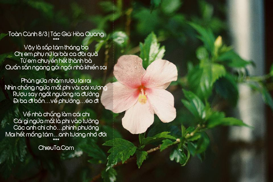 Thơ Chế 8/3 Bựa, Top Các Bài Thơ Và Câu Thơ Chế Về Ngày Mùng 8/3