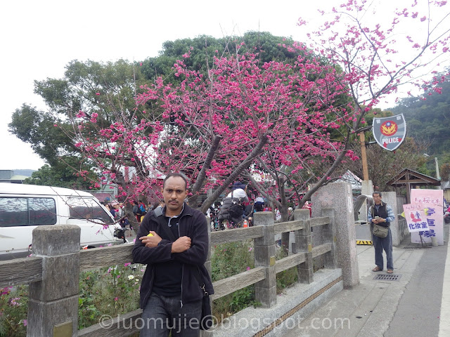 Taichung cherry blossoms