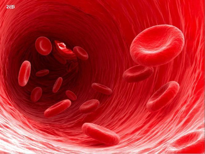 रक्त एवं परिसंचरण तंत्र