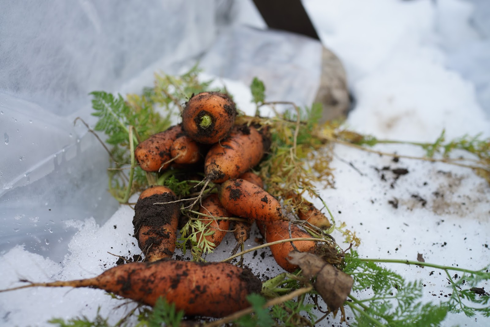 whittled down life winter gardening success eating seasonally is