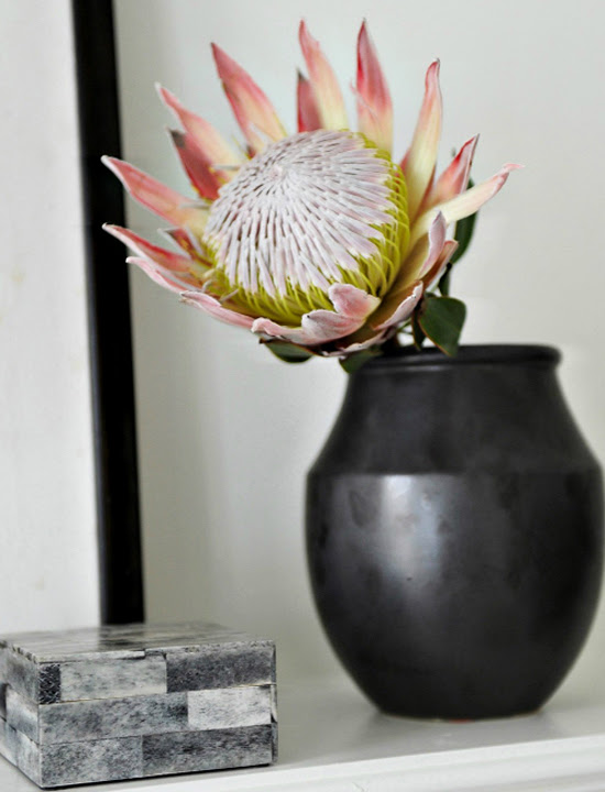 Safari Fusion blog | Pretty Protea | My all time favourite sculptural flower, the King Protea via Rue