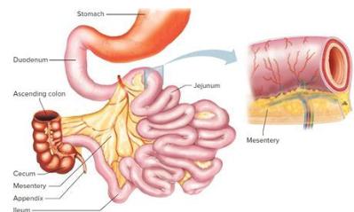 Bowel Cancer Symptoms Symptoms Of Small Bowel Cancer