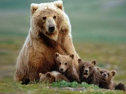 Family, Bear, Bear cubs, Forest, Cute family, Cute