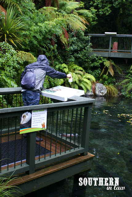 Jesse feeding the fish at Rainbow Springs Kiwi Park Rotorua New Zealand