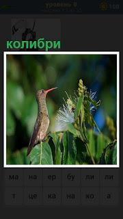 птица колибри сидит в высокой траве подняв свой клюв