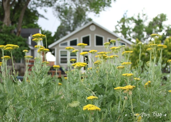 Yarrow // Independence Day in Small Town America // WWW.THEJOYBLOG.NET