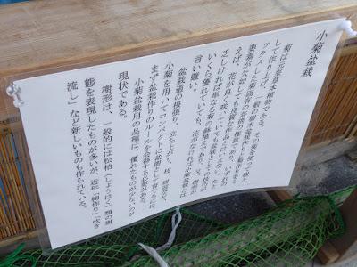 ひらかた菊花展 (枚方市役所周辺) 小菊盆栽