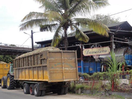 Entrée de la Rhumerie avec camion chargeant de a canne à sucre
