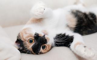 Pelihara kucing ? ini dia 8 Cara unik kucing mengungkapkan rasa cinta pada manusia