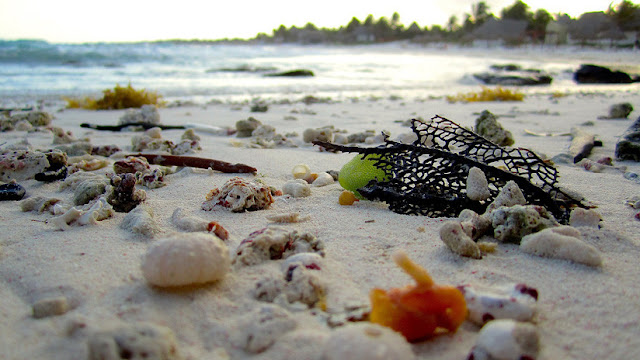 Hallan muerta una criatura marina similar al 'peluquín' de Donald Trump