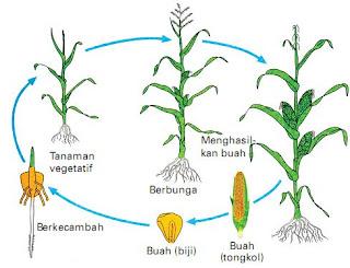 Arti Pertumbuhan Tanaman Dalam Biologi