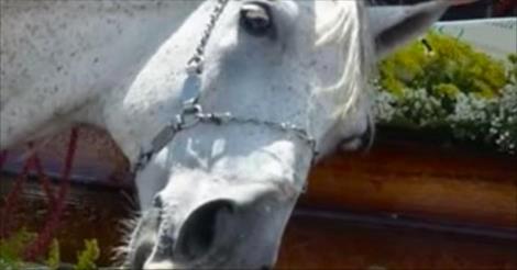 Un cheval renifle un cercueil fermé. Lorsqu'il comprend qui se trouve à l'intérieur, sa réaction fait pleurer tout le monde aux funérailles.