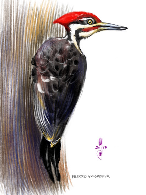 Pileated Woodpecker bird painting by Artmagenta
