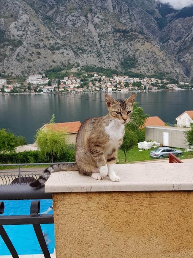 montenegro, matkakertomus, muo