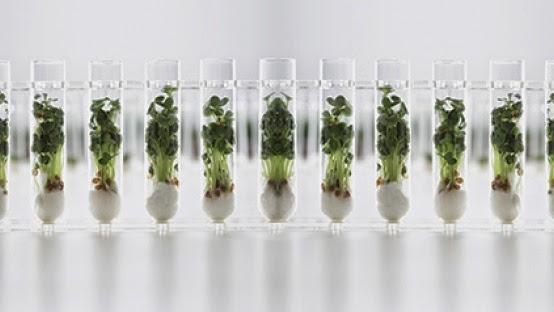 Growing plants in tubes