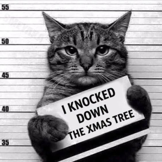 Funny Convicted Cat Picture - I knocked down the xmas tree