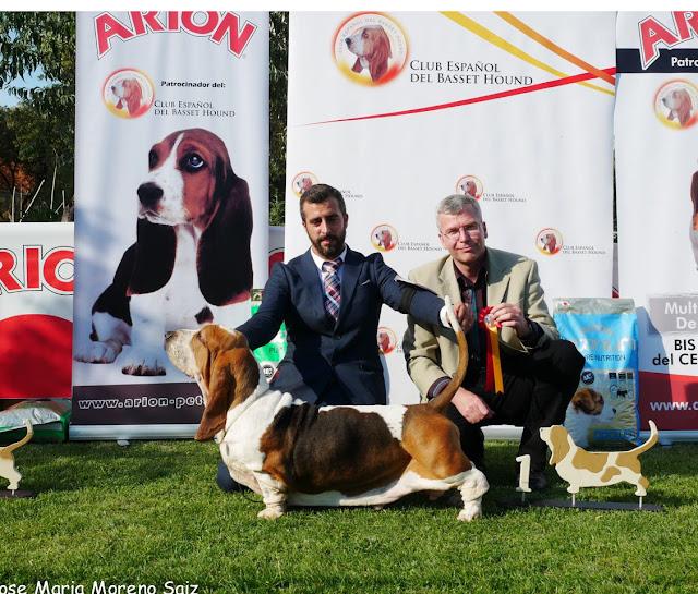 Resultados XXI Exposición Monográfica con CAC - Arcas (Cuenca) 2016 8
