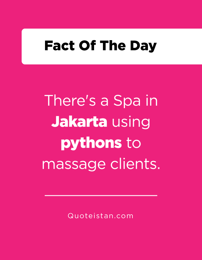 There's a Spa in Jakarta using pythons to massage clients.