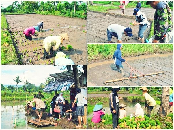 Agribisnis Pertanian Aspek Aspek Sosial Ekonomi Dalam Kegiatan