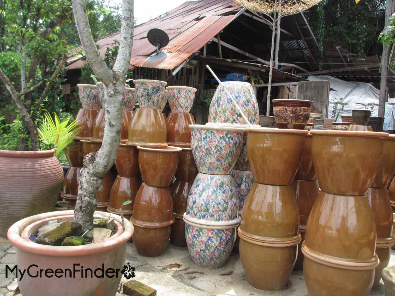 MY GREEN FINDER   Plant Vendors: Choo Lan Florist & Gardening