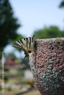 Lepke a sírkövön a balatonudvari temetőben
