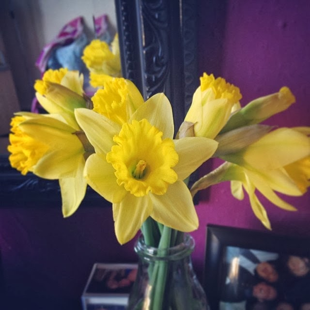 Daffodils, Spring, Teacups & Buttondrops