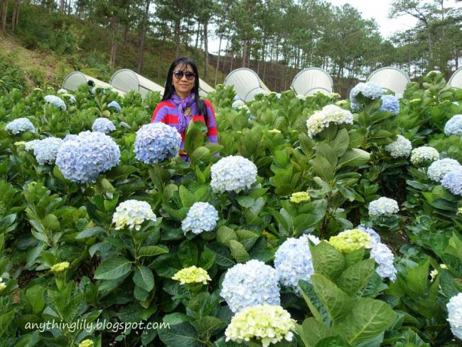 Anythinglily Dalat S Valley Of Love