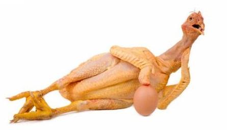 ayam+dan+telur.jpeg (445×256)