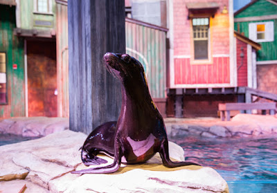 SunTrust Pier 225 | Sea Lion | Georgia Aquarium