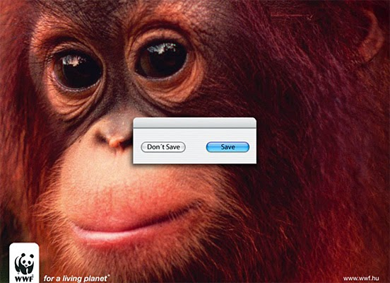 cute monkey chimp orangutan world wildlife funds big eyes