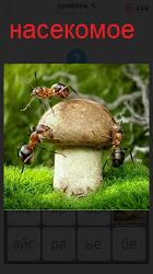 На гриб растущий в лесу залезают насекомые муравьи