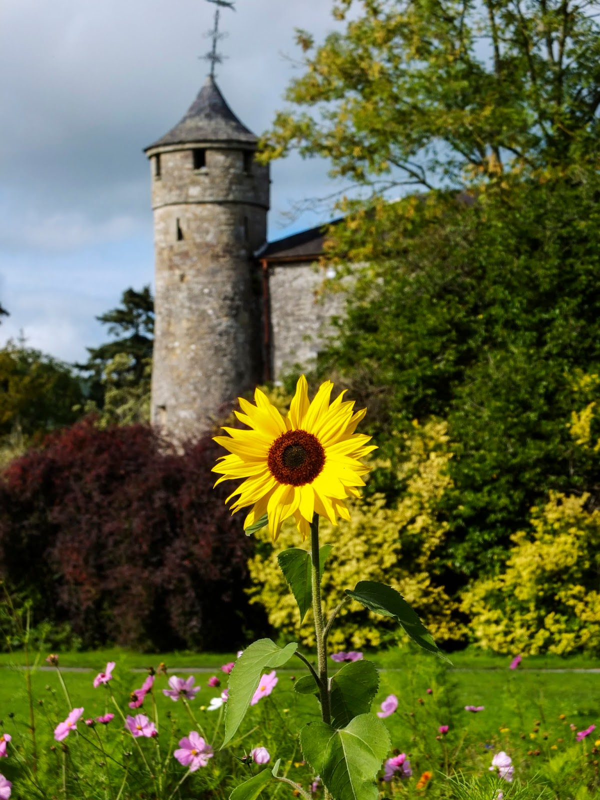 A round corner tower with a sunflower in front of it at Cahir Castle.