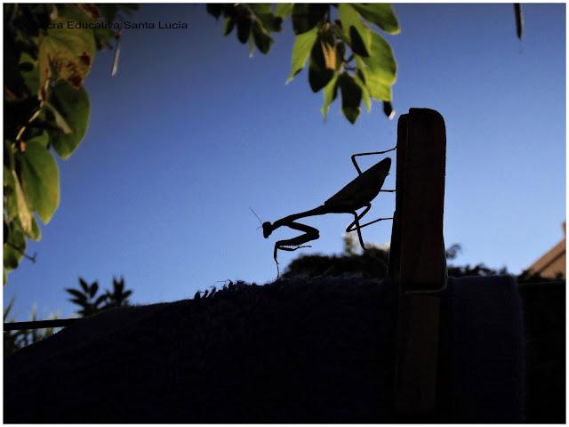 Mantis - Foto Marcos L para Chacra Educativa Santa Lucía