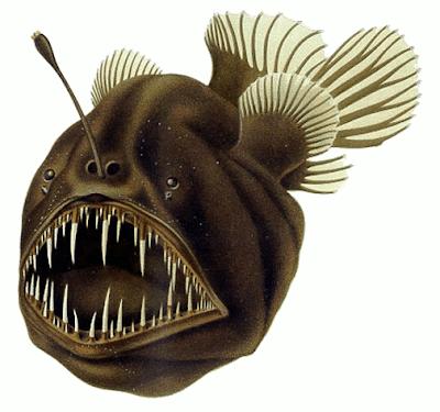 anglerfish-سمك-ابو-الشص