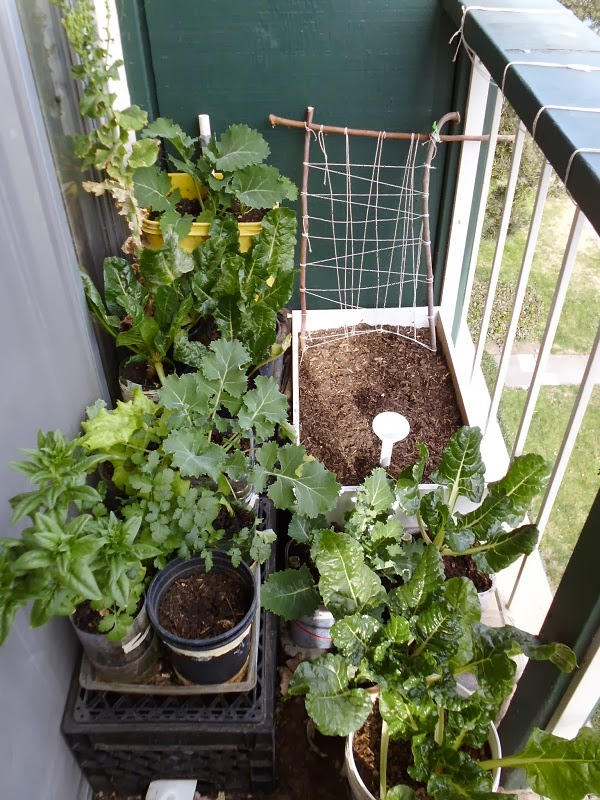 2014 left side balcony garden