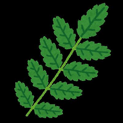 山椒の葉のイラスト